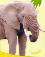 Слоненок и цирк