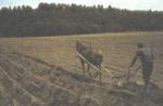 Подаренная лошадь