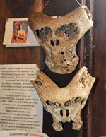 Таинственный череп «инопланетянина» и след «Аненербе»