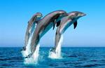 Дельфины - бывшие люди